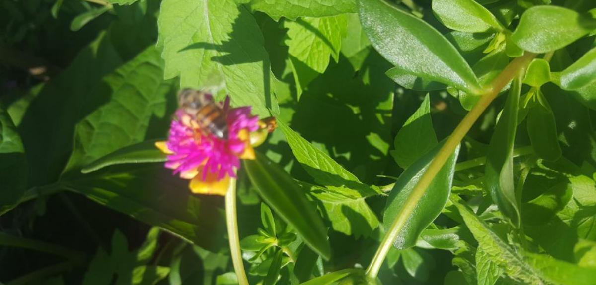 Abelha pousada em flor rosa com o fundo de folhas verdes